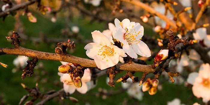 06-Blossoms-Portrait-Blossom1