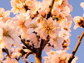 [KEEP] For you in Full Blossom