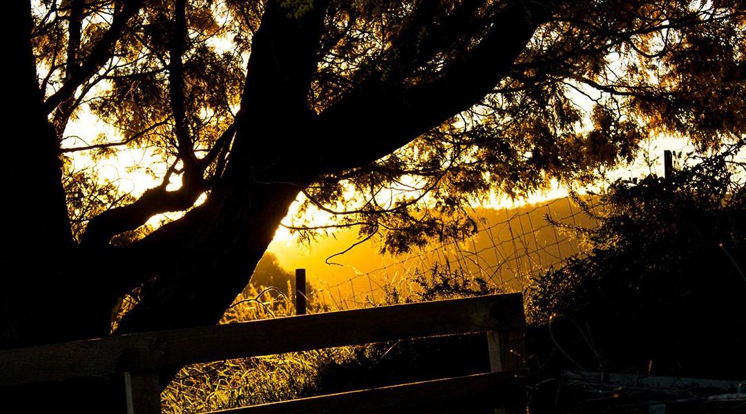 Sunset-Glow-03