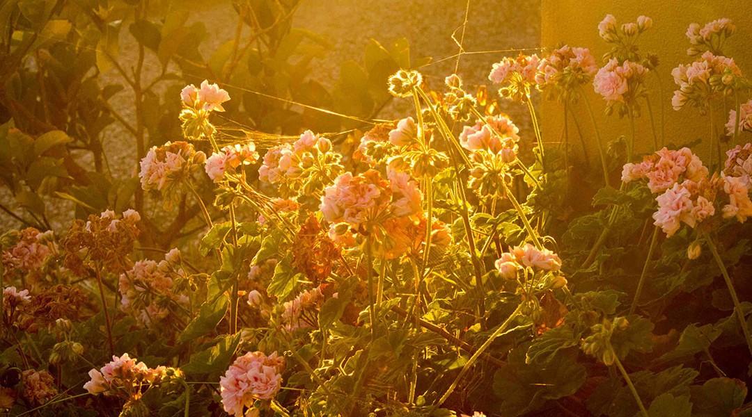 Sunset-Glow-04